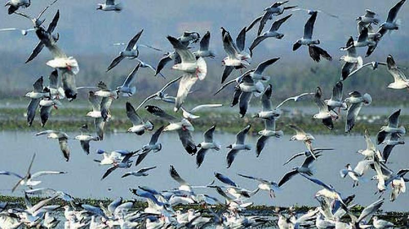 The count is carried out at important wetlands and it helps in identifying and protecting new sites of importance for water birds.