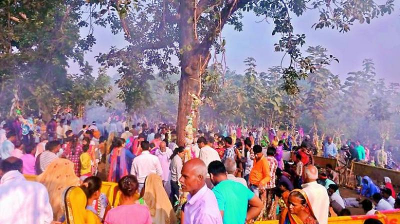 People throng the miracle tree in Satpura Tiger Reserve in Madhya Pradesh on Wednesday.