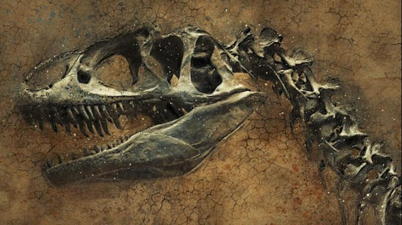 The skeleton, now on shows in the French city of Lyon to possible buyers such as museums or private collectors before the June 4 auction, is estimated to be worth between 1.2 million and 1.8 million euros.
