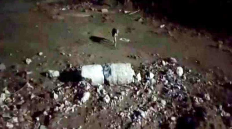 Stray dogs were spotted eating an infant's body in Odisha's Balasore. (Photo: ANI)