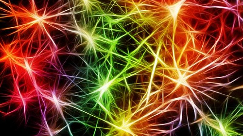 The advantage of involving the nervous system is that it can communicate information across space in a span of milliseconds, compared to hours or days for the immune cells to do the same function. (Photo: Representational/Pixabay)