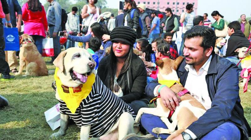 The Pet Fed carnival that took place in Delhi in December 2016.