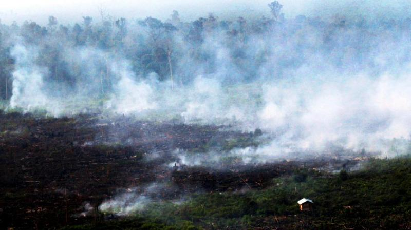 Smoke billows during a forest fires in Pelalawan, Riau province, Indonesia. (Photo: AP)