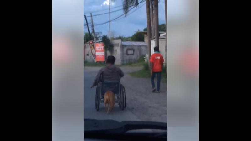 The video shows Digong using his head and snout to push his master's wheelchair on the road.