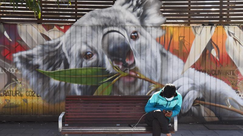 A man looks at his phone as he sits in front of a mural of a koala in Melbourne on September 10, 2020. - A dispute over protection measures for Australia's endangered koalas threatened September 10 to topple the government of the country's biggest state. (AFP)