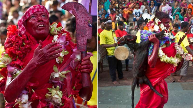 Goats and pigeons are offered as sacrifice during this festival held to worship Manasa, the serpent goddess, with the belief that she will fulfill the wishes of her devotees. (Photo: AP)