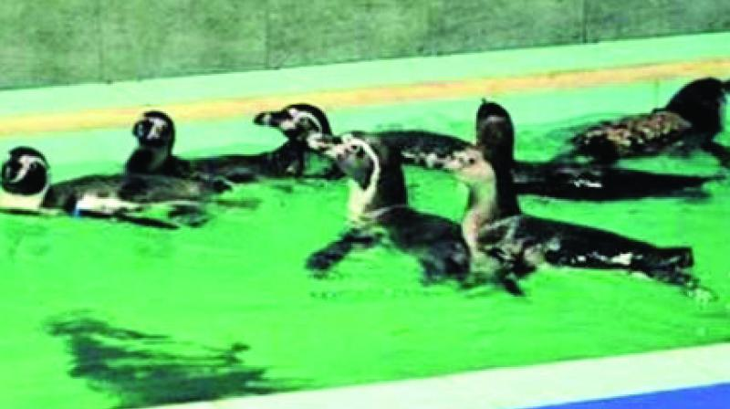 Now, there are seven penguins in the zoo.