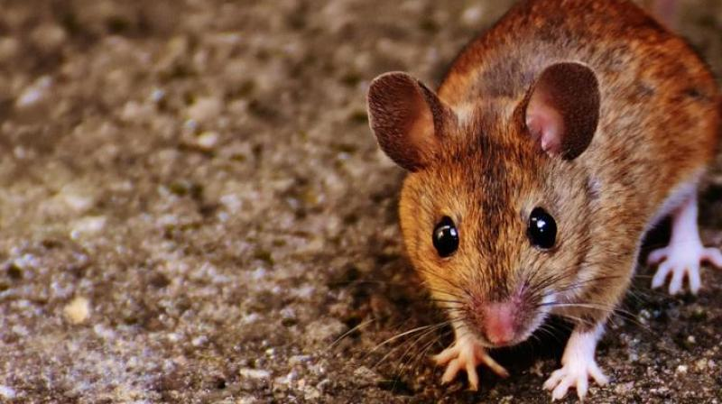 In a similar incident last year, Patna police had blamed rodents after several thousand litres of alcohol were found missing from storerooms. (Representational Image)