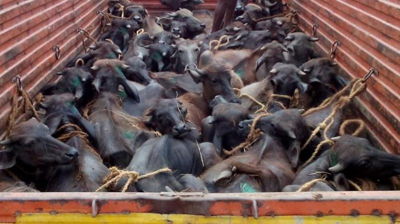 Just a few hours after the meeting, 136 cattle were recovered while being smuggled to Bangladesh. (Photo: File)