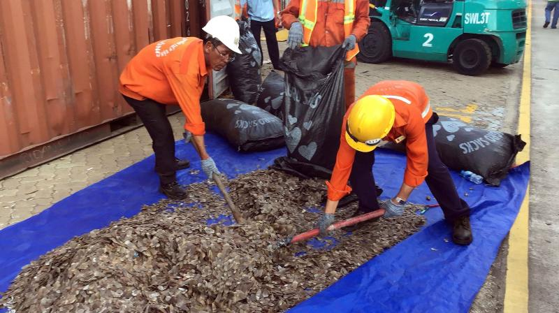 Officials sort seized pangolin scales at a port in southern Vietnam's Ba Ria Vung Tau province. - Vietnam, one of Asia's biggest consumers of wildlife products, has suspended all imports of wild animal species