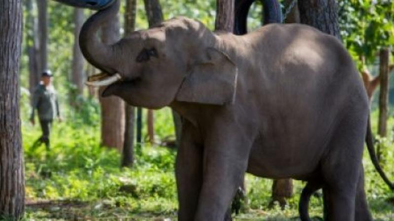 In 2013, a nine-month government-authorised inspection of 16 circuses across India — as well as other inspections by expert teams from 2013 to 2016 — revealed systemic, widespread abuse of elephants, horses, birds and other animals. (Photo: AFP)