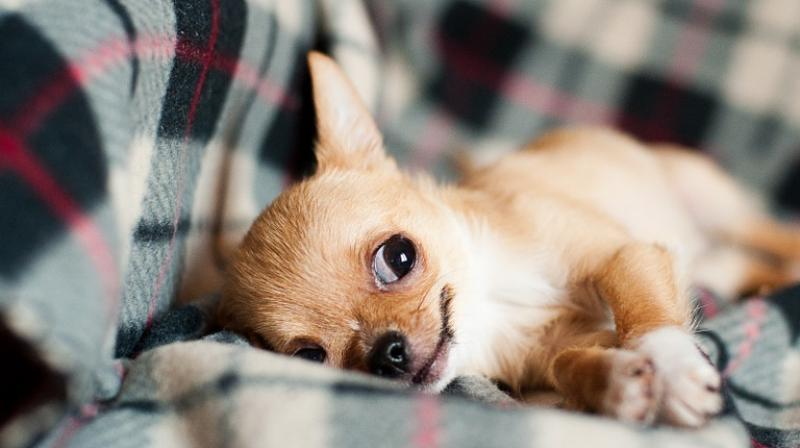 "One in three deaths in UK dogs younger than 3 years old was from ""undesirable"" behaviours, a disproportionately high number. (Photo: Pixabay)"