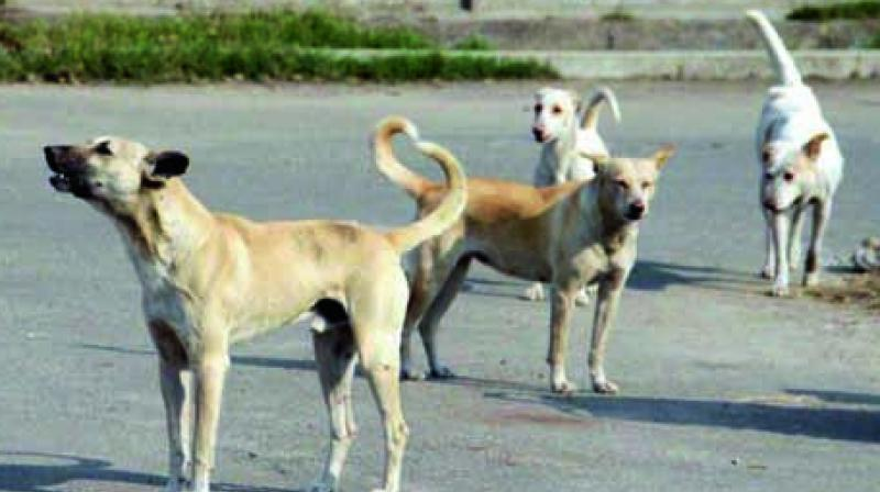 Three men were captured in a CCTV camera in Delhi's Vasant Vihar for stoning a stray dog to death. (Representational Image)