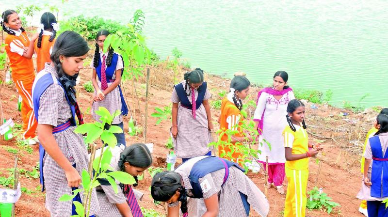 Students plant saplings during the restoration process.