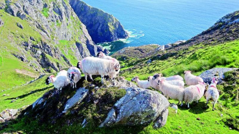 Sliabh Liag, among the highest marine cliffs in Europe, is one of many gorgeously intimidating sights that greets visitors on the Wild Atlantic Way.