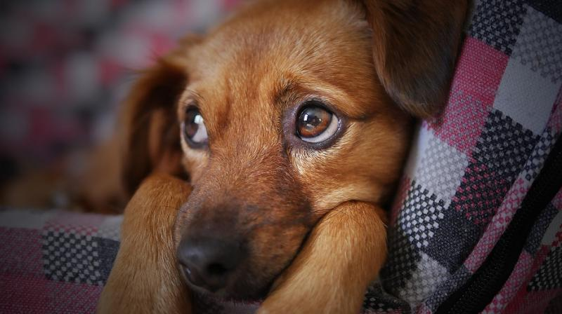 Pets need loads of nourishment and care for their wellbeing.