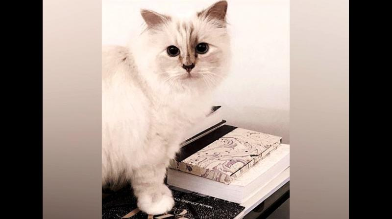 Choupette boasts of around 170,000 followers on Instagram and a further 50,000 on Twitter. (Photo: ANI/Instagram)