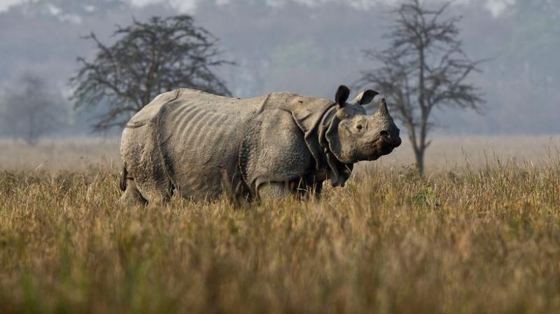 From rhinos showing a peak in numbers in India, to a cat being reunited with owner after 12 years, here are animals who were in news. (Photos: AP)