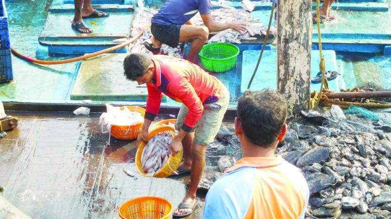Fishermen at work at Sassoon Docks