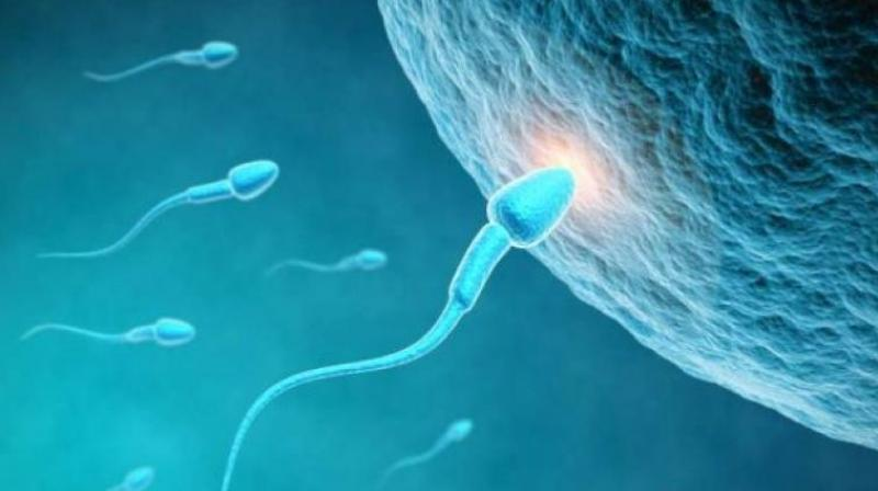 These findings shatter the myth that a man may need 24 to 36 hours after ejaculation for replenishing his sperm bank (Photo: AFP)