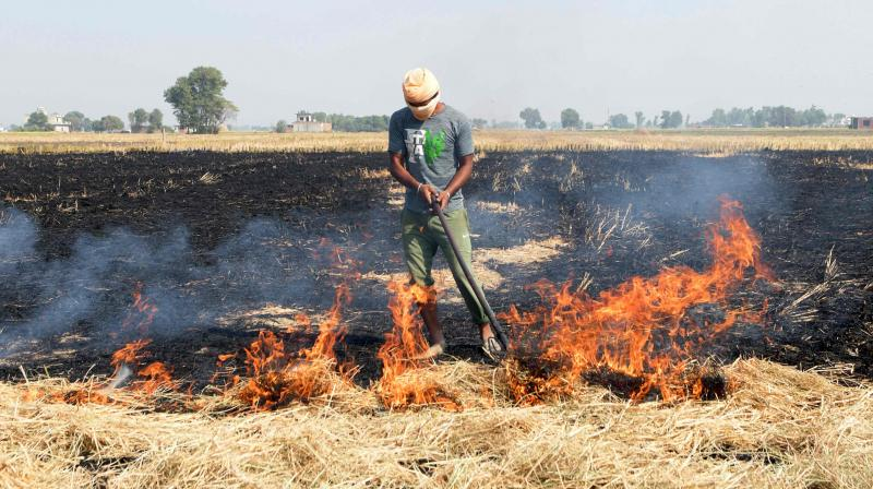 A farmer burns straw stubble after harvesting a paddy crop, in a field on the outskirts of Amritsar on October 16, 2020. (AFP)