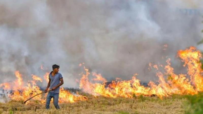 Stubble burning is the source of much of the pollution in Delhi and Punjab. (PTI)