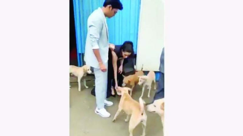 We are not sure if the actress carries dog food around with her, but that's what it seemed like when she was out promoting Chhichhore on a television show.