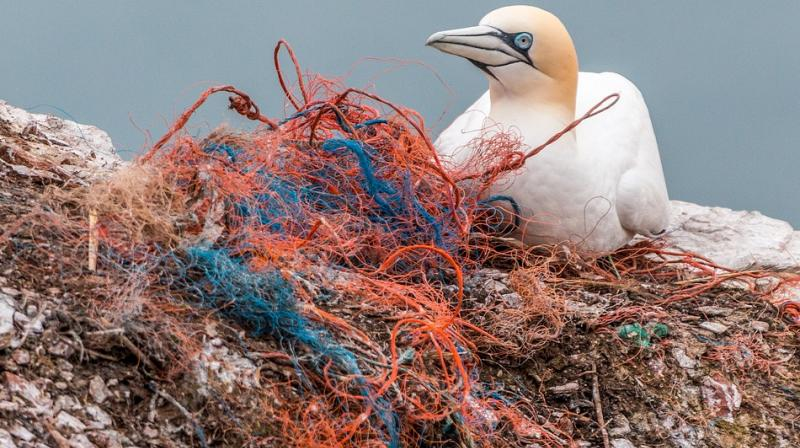 The team of divers managed to remove 1,626 pounds of trash and 60 pounds of fishing lines from the ocean floor. (Photo: Representational/Pixabay)