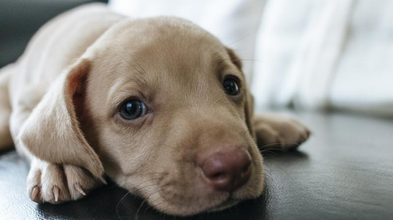With Valentine's Day round the corner, there will be many who might opt to gift their beloved a puppy, kitten or even a furry white bunny.
