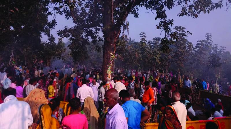 Hundreds of people throng Nayagaon village to worship the 'miracle' tree.