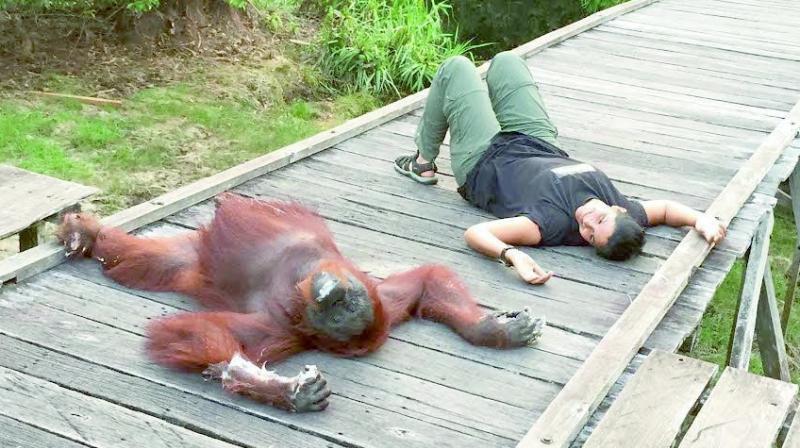 Manjiri Latey unwinds with an orangutan.