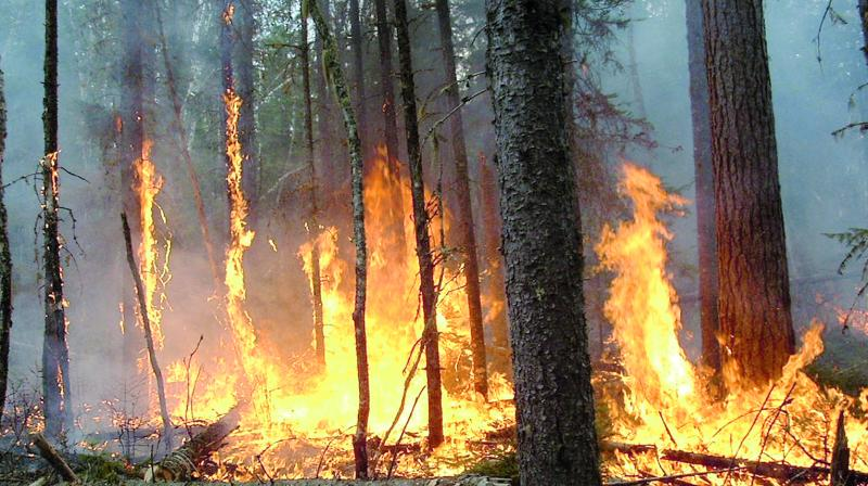 Close to 20,000 forest fire incidents are reported annually in the country.