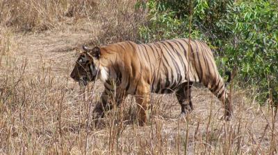 Uttarakhand's Jim Corbett National Park may be renamed as Ramganga National Park