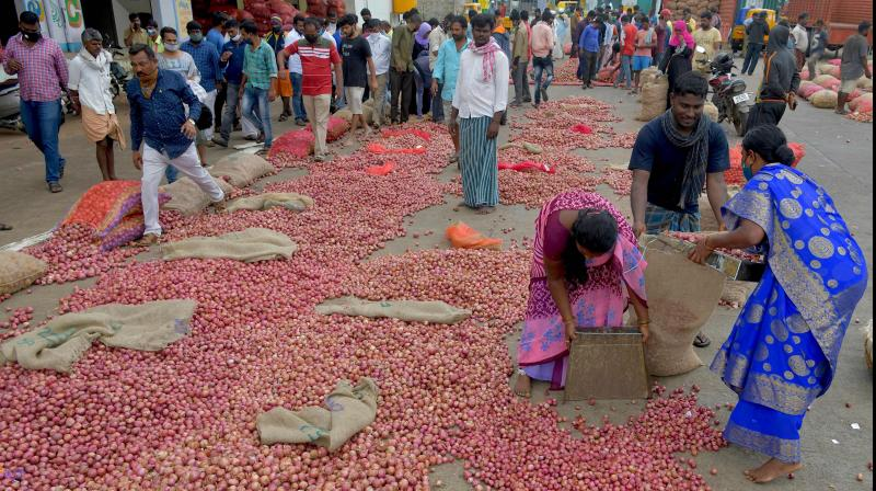 Workers gather onions at APMC market yard. — PTI photo