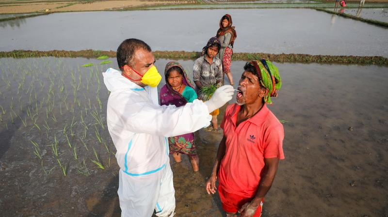 A National Health Mission (NHM) worker collects swab sample of a labourer for COVID-19 test, at a paddy field in the outskirts of Jammu, Wednesday, June 9, 2021. (PTI)