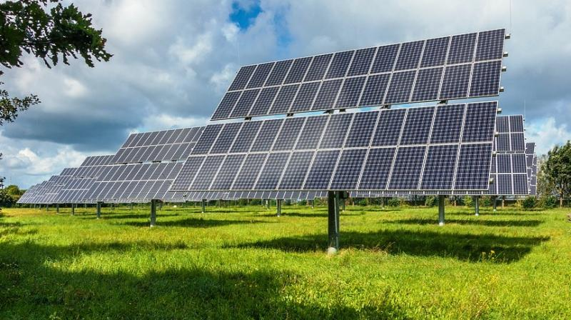While caffeine appears to significantly improve the performance of cells that utilise perovskite to absorb sunlight, the researchers do not think it will be useful for other types of solar cells. (Photo: Representational/Pexels)