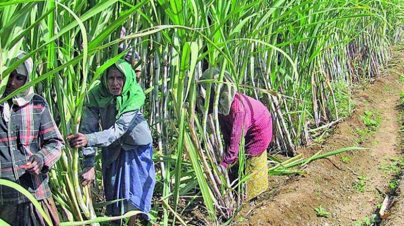 According to official data, Maharashtra has recorded 1,307 farmer suicides till the end of June this year.
