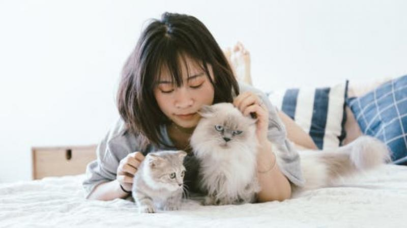 Cats form a deep connection with their owners. (Photo: Representational/Pexels)