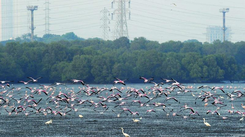 Flamingos at Sewri mudflats on Thursday.