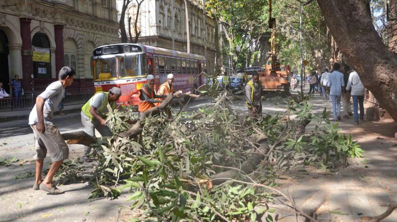 Tree cutting is one of BMC's pre-monsoon activities.