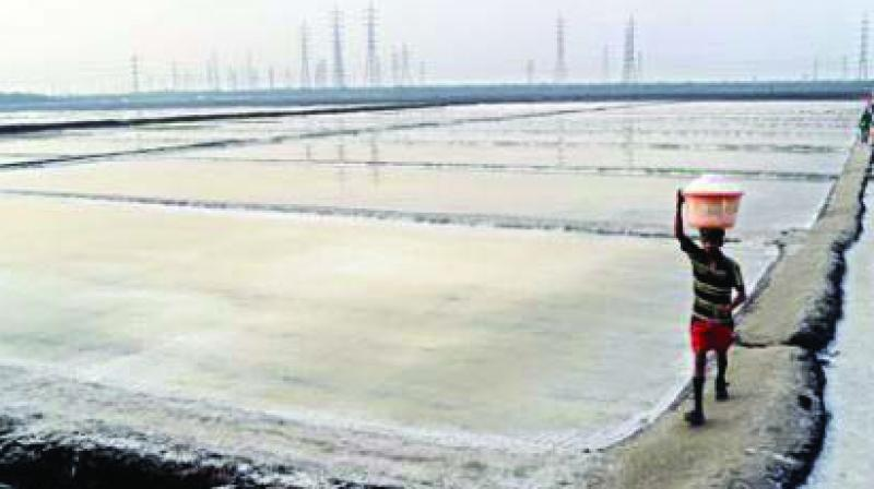 Activists have also highlighted that as the salt pan lands are inter-tidal areas and the open space helps in preventing flood situation in the city.