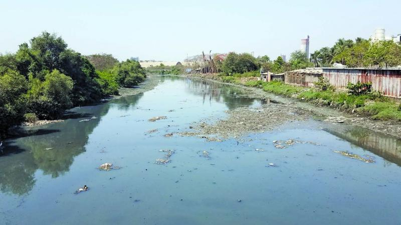 The officials began a search operation in the drain located at Wadala Mahul road with three divers.