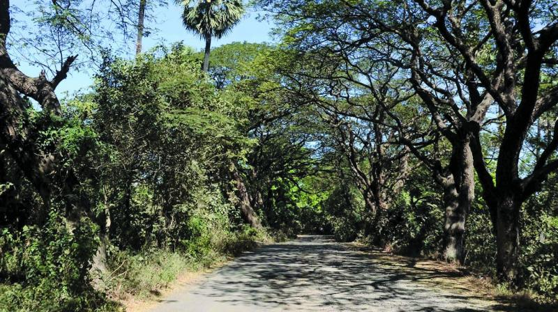 Wildlife activists have urged the state government to reconsider its decision to construct the metro car shed at Aarey Milk Colony after nearly143 birds of 21 species were spotted within two-kilometre radius of the proposed car shed site within 2 hours.