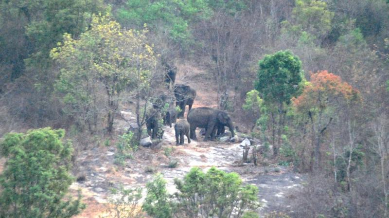 The eco sensitive zone around the National park is currently 168.84 sq km