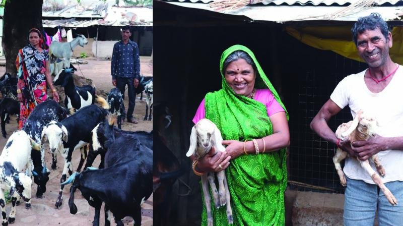 Goat and poultry rearing are the second livelihood options after agriculture with 7,668 households in goat-rearing and 2595 in poultry as per a survey in March this year.