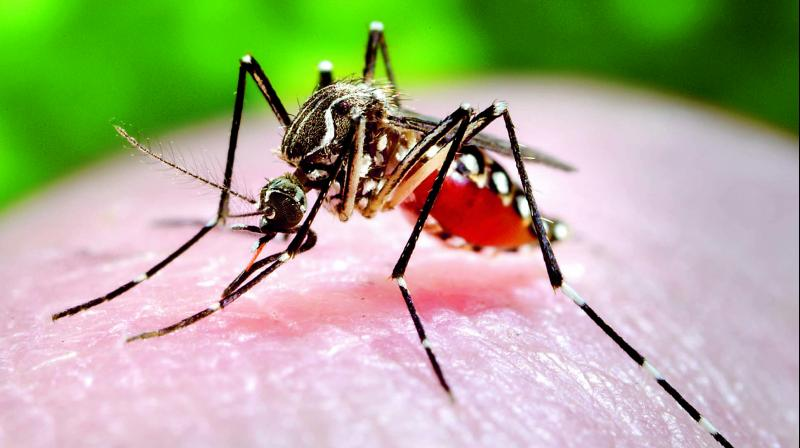 Dengue outbreak during the summer is sporadic in nature and not endemic as is seen during the monsoon season.