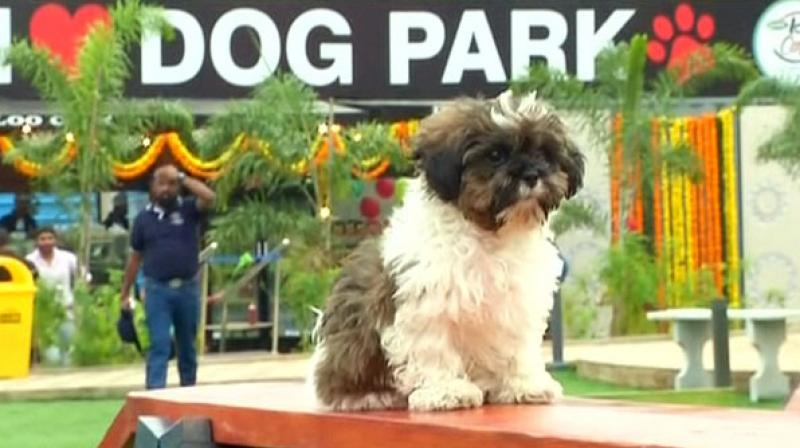 Pooches will be treated with an extravagant experience as the park houses a splash pool, an amphitheatre, loo cafe and three lawns. (Photo: ANI)