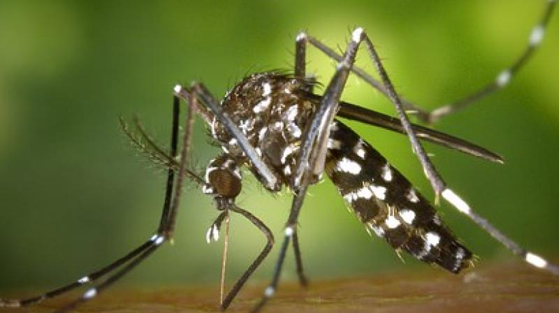 The official toll till December 26 had stood at four, even though some hospitals had reported a few more deaths due to dengue.  (Photo: Pixabay)