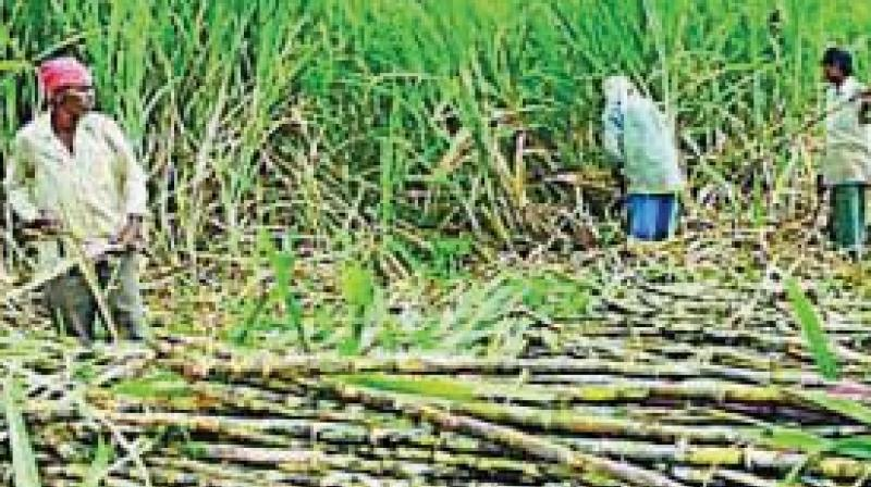 Many sugar barons have raised their concerns over the central government's decision to import sugar.