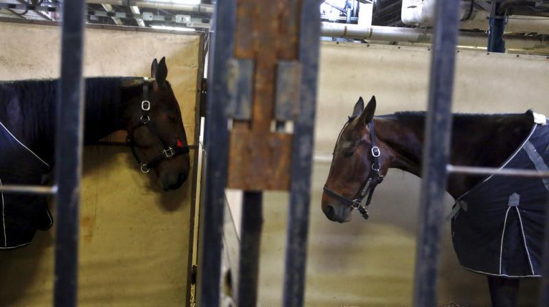 Amish from all over US congregate at Harrisburg to buy and sell their massive draft horses and magnificent harness horses. (Photo: AP)